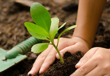 5 Methods On Planting And Saving Trees