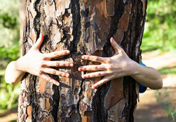 Save Trees To Save Life