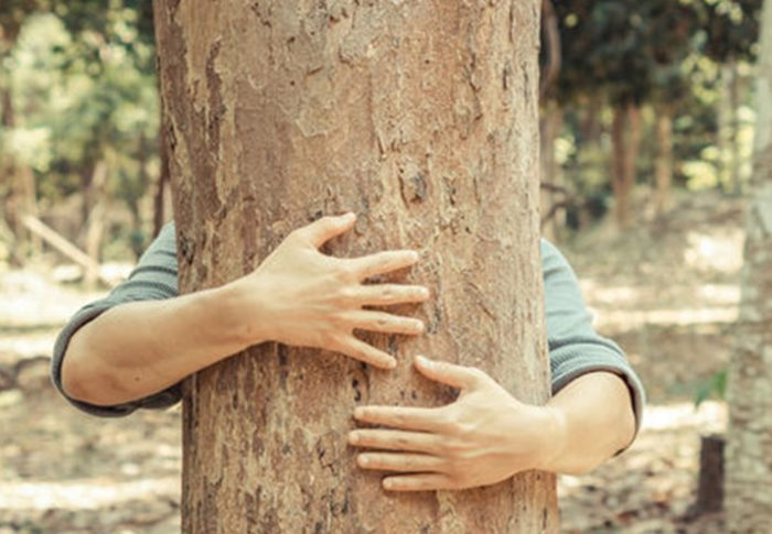 7 Ways To Save Trees For Better Environment