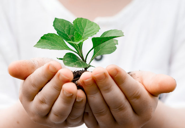 7 Simple Ways To Help The Environment